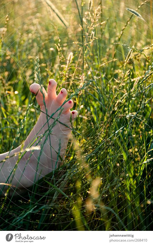 Human being Nature Youth (Young adults) Green Red Summer Girl Joy Adults Meadow Playing Emotions Young woman Feet Field Sit
