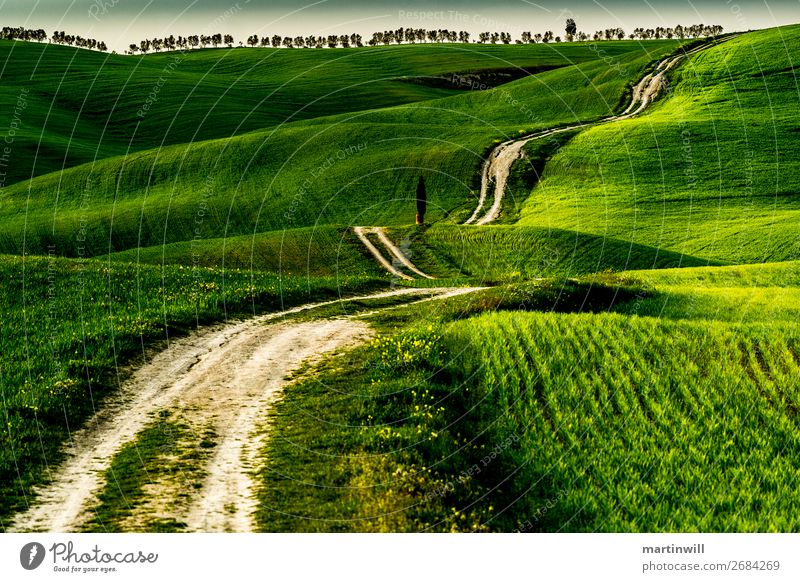 Way to the horizon of Tuscany Vacation & Travel Tourism Trip Hiking Jogging Landscape Meadow Field Hill Lanes & trails San Quirico d'Orcia Val d'Orcia Green