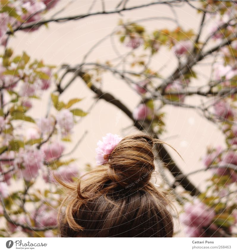 pink realm Hair and hairstyles Feminine Head 1 Human being Plant Tree Leaf Blossom Cherry blossom Cherry tree Accessory Hair accessories Brunette Braids Chignon