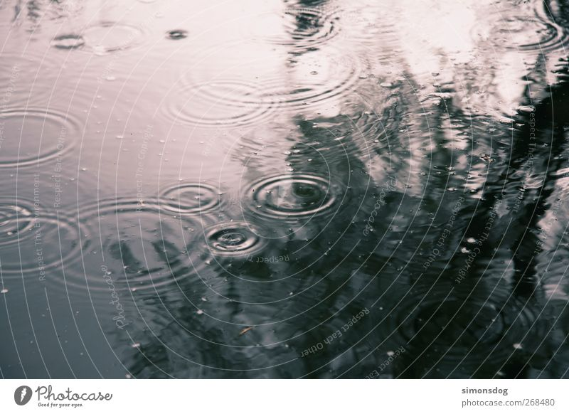 rain circles Environment Nature Elements Water Drops of water Weather Rain Tree Pond Lake To fall Contentment Movement Idyll Circle Strike Reflection To enjoy