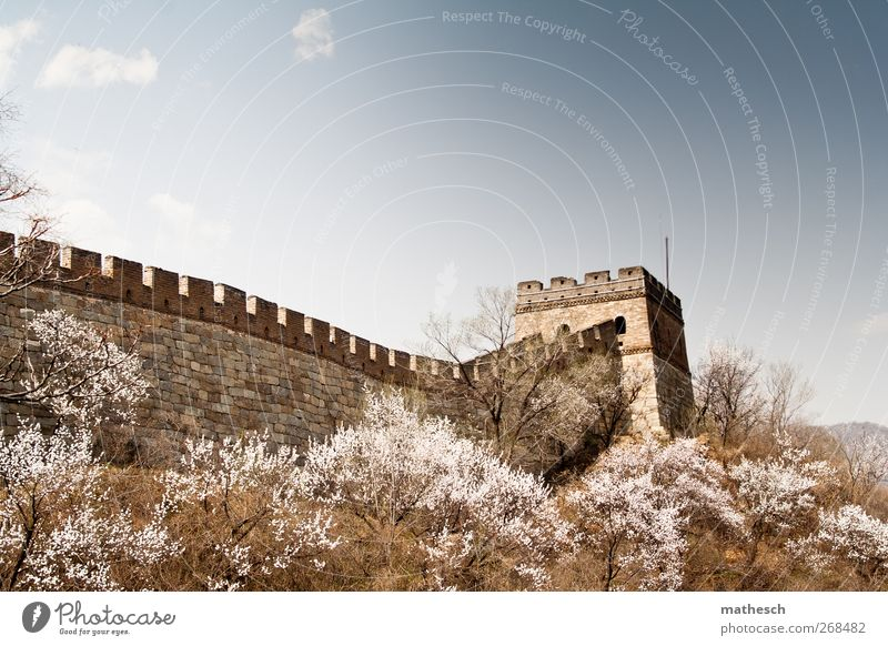 Sky Blue Old Tree Clouds Landscape Wall (building) Spring Wall (barrier) Brown Large Bushes Culture Beautiful weather Asia China