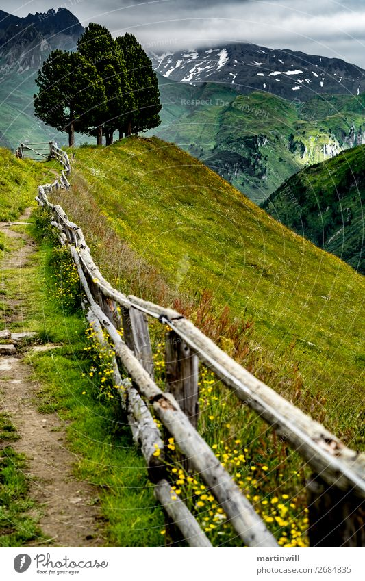 Three trees above the Pustertal valley Mountain Hiking Nature Landscape Tree Meadow Rock Alps Peak Valley South Tyrol Dolomites Ahrn valley Fence Lanes & trails