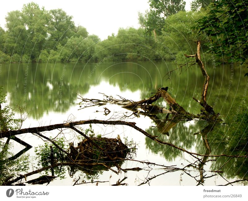 Water reflects beautifully Reflection Grass Mirror Tree Moody Flood Branch Root