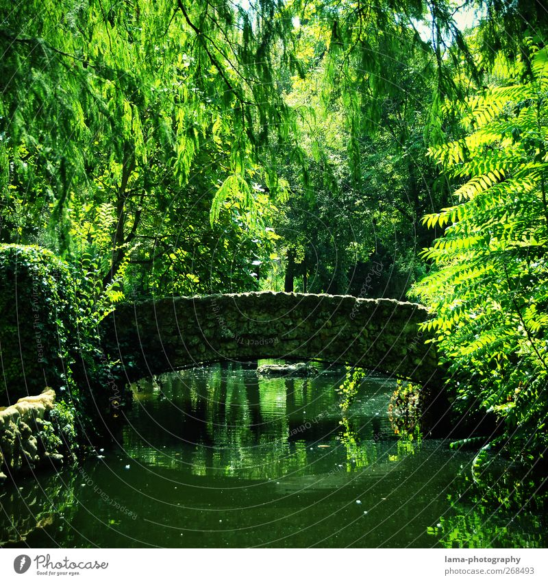 El puente idílico [XLIII] Environment Nature Plant Water Tree Fern Leaf Willow tree Park Pond Lake Brook Seville Maria-Luisa park Andalucia Spain Bridge Natural