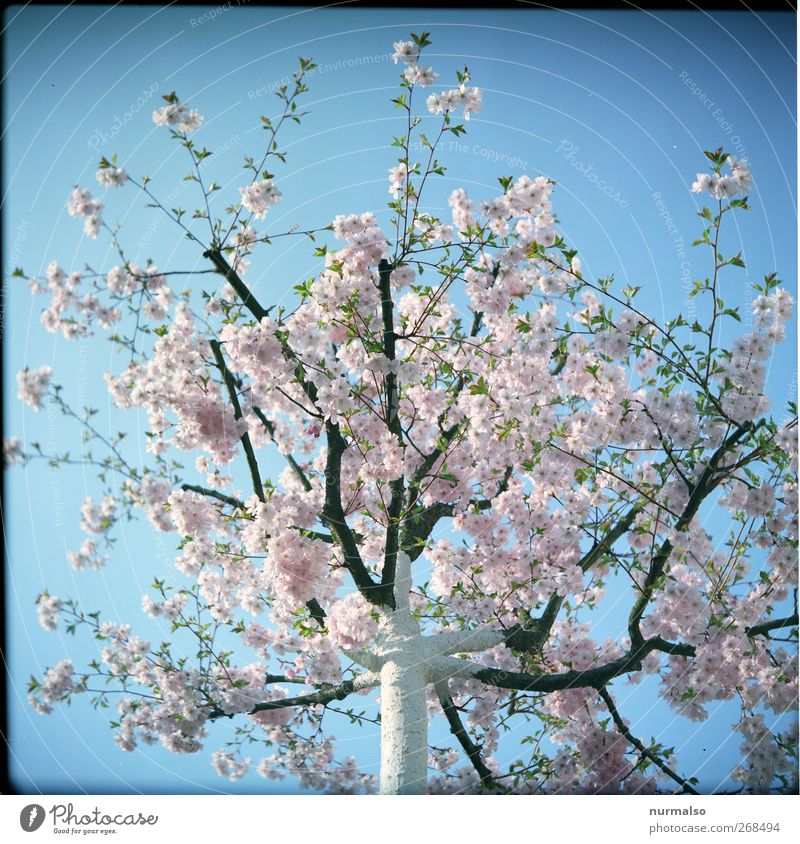 Sky Nature Beautiful Tree Plant Animal Feminine Spring Happy Garden Blossom Dream Park Moody Pink Leisure and hobbies