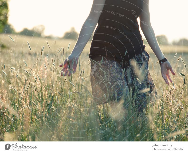 Human being Youth (Young adults) Plant Summer Flower Adults Relaxation Feminine Emotions Grass Freedom Going Field Young woman 18 - 30 years Bushes