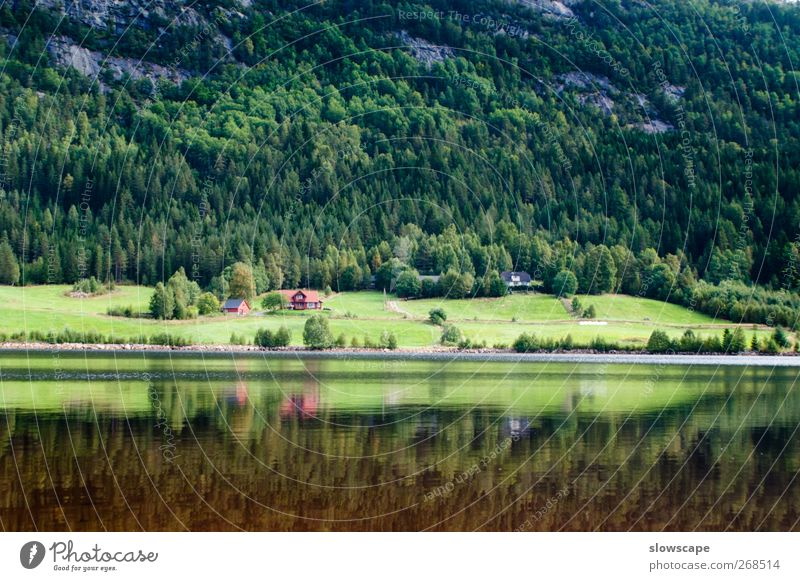 Lake Landscape in Norway Fishing (Angle) Nature Water Summer Forest Hill Lakeside Bay Fjord River Fishing village Relaxation Simple Clean Beautiful Adventure