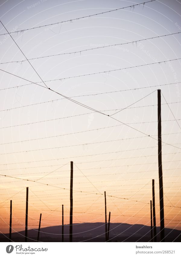 Hop poles 2 Beer Cloudless sky Horizon Spring Beautiful weather Agricultural crop Field Hill Red hop poles Wire Colour photo Exterior shot Evening Twilight