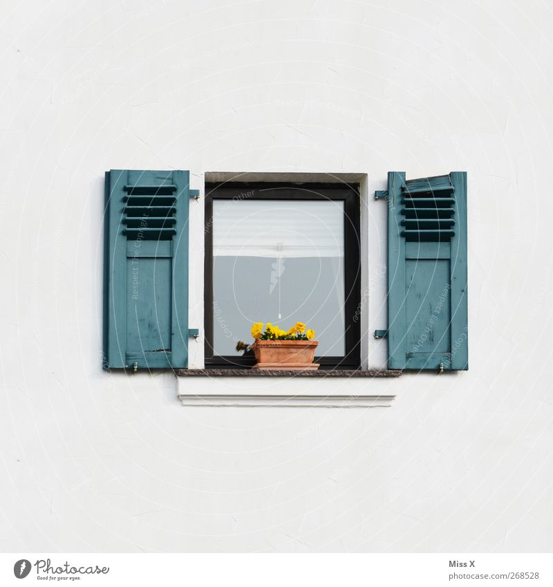 Flower Window Wall (building) Small Wall (barrier) Decoration Flowerpot Shutter Window board Pot plant Pansy