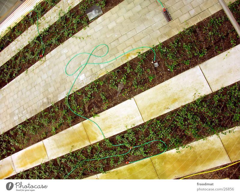Garden Crazy Diagonal Hose Graphic Striped Minimal Potsdam Potsdam-Babelsberg
