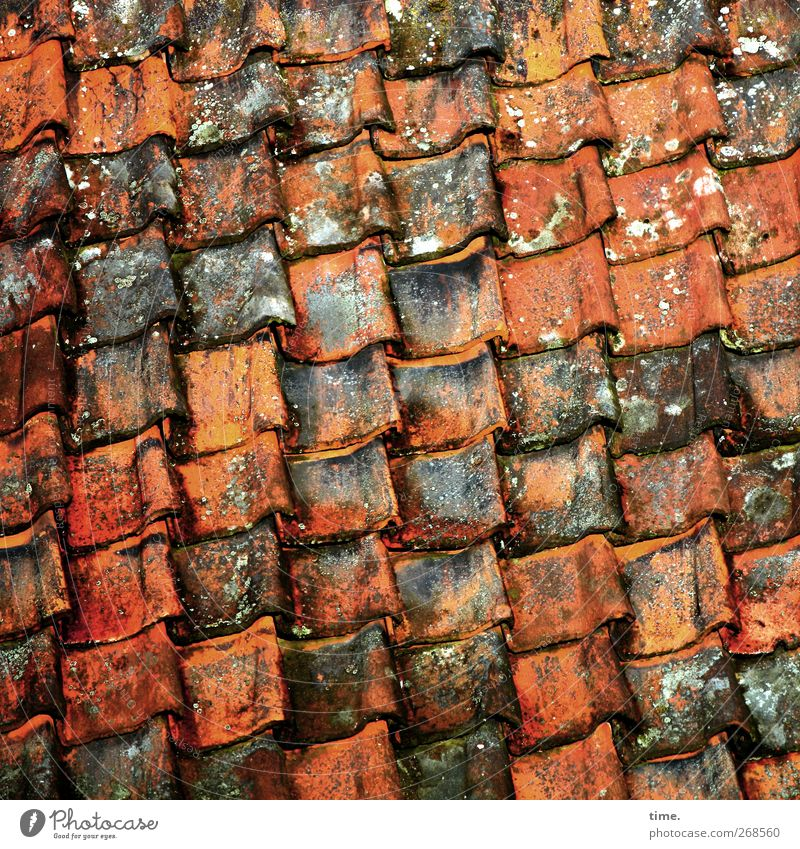 Old House (Residential Structure) Arrangement Esthetic Roof Craft (trade) Sharp-edged Decompose Roofing tile Roofer