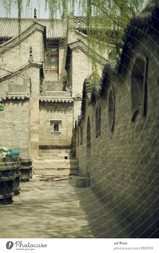 backyard Spring Tree Leaf Park Pingyao China Small Town Downtown Old town Skyline Deserted House (Residential Structure) Palace Castle Manmade structures