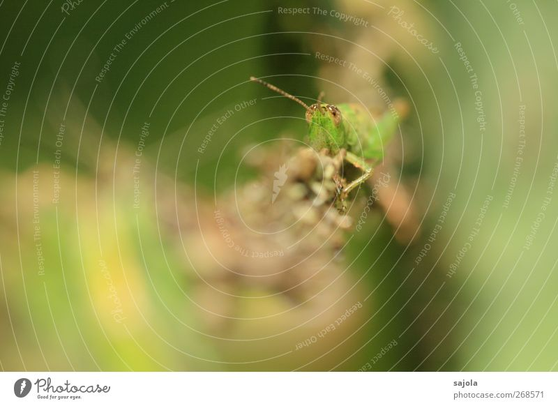 Nature Green Animal Observe To hold on Insect Camouflage Locust Adjustment