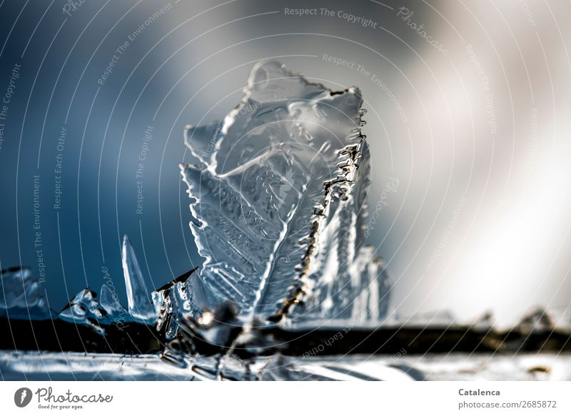 Icy structures Winter Beautiful weather Ice Frost Firm Cold Point Blue Gray Silver Moody Structures and shapes Design Energy Climate Environment Growth