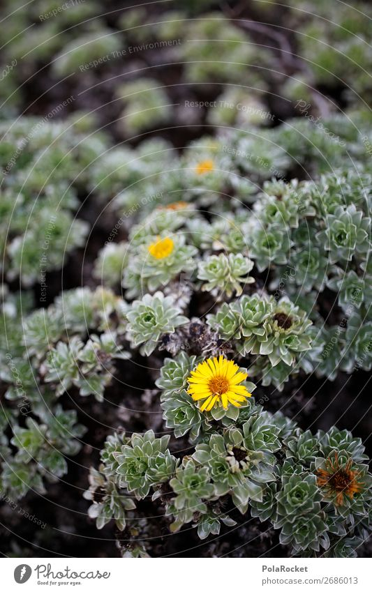 #AS#yellow flower Environment Nature Landscape Plant Happiness Flower Part of the plant Yellow Herbs and spices Beautiful Perfect To enjoy Gardening Flowerbed