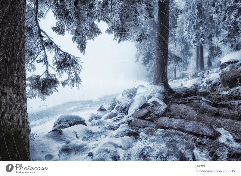 Light and shadow Winter Snow Nature Bad weather Fog Ice Frost Lakeside Dark Bright Cold Blue Black White Calm Idyll Climate Mummelsee Lake Fantastic