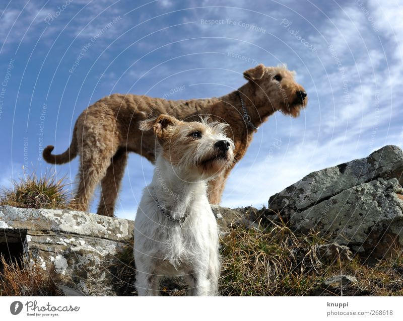 Dog Sky Nature Blue White Summer Animal Baby animal Life Grass Gray Happy Above Rock Brown Together