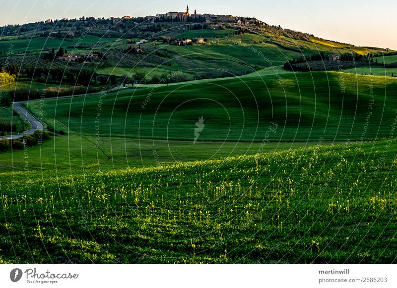 Pienza in the morning light Vacation & Travel Landscape Spring Grass Hill Tuscany Val d'Orcia Village Deserted Street Calm Lanes & trails Shadow Shadow play