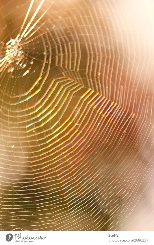 dream catcher Nature Net Network Catch Glittering Round Beautiful Multicoloured Yellow Orange Mood lighting Dream Spider's web Dreamcatcher Reticular Trap