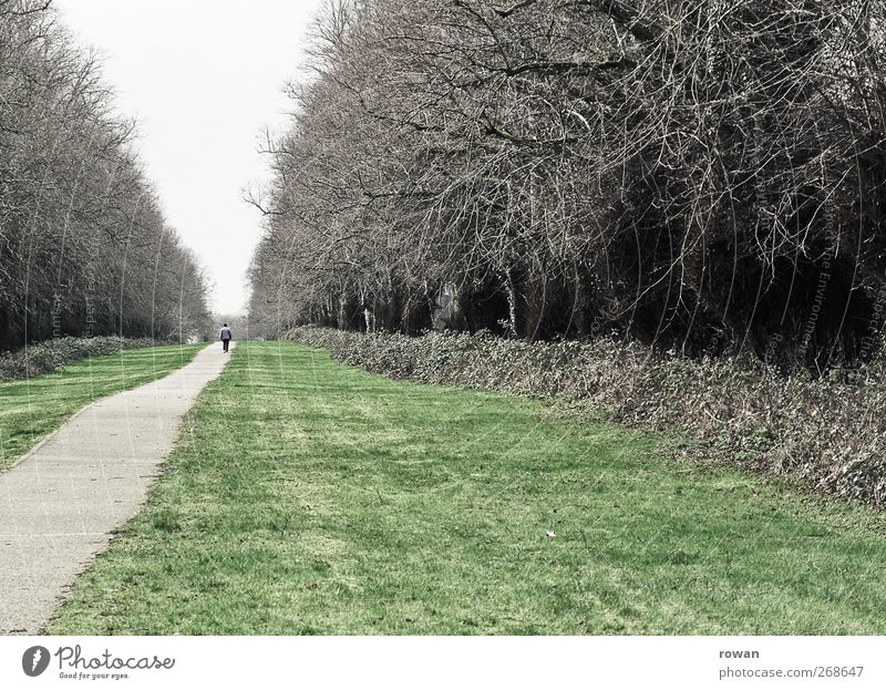 in the vanishing point Human being 1 Tree Park Meadow Forest Street Lanes & trails Going Promenade To go for a walk Vanishing point Perspective Lawn Gray Target