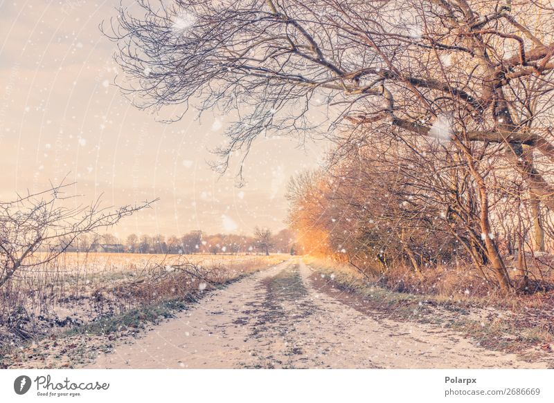 Snow falling on a countryside road in the winter Beautiful Vacation & Travel Winter Nature Landscape Climate Weather Snowfall Tree Park Forest Street