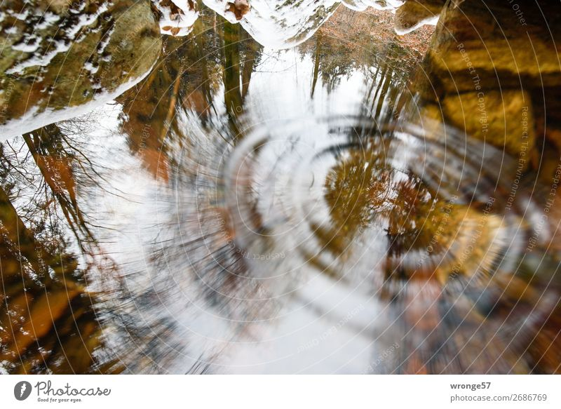 Thought games | Gravitational waves Nature Earth Air Water Autumn Tree Moss Forest Rock River bank Harz Wet Brown Gray Green Surface of water Reflection