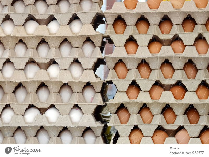 White Nutrition Food Brown Fresh Round Many Farm Delicious Organic produce Sell Hen's egg Free-range rearing Farmer's market Eggs cardboard Egg production