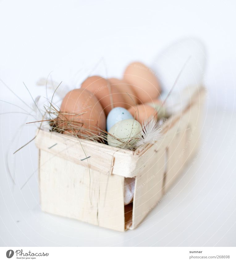 Eggs in basket Food Nutrition Breakfast Restaurant Easter Farm animal Barn fowl Box Brown White eggs peasant Agriculture Feather Straw ostrich egg Rooster