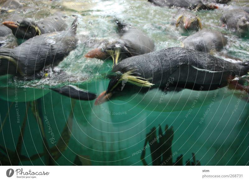 Water Green Ocean Animal Healthy Wild animal Speed Group of animals Zoo Brash Aquarium South Pole Antarctica