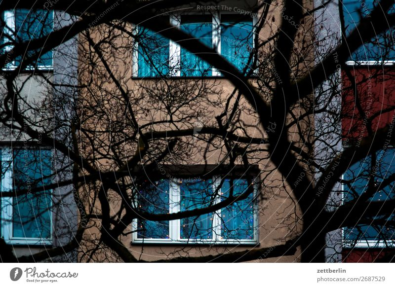 Town Tree House (Residential Structure) Window Dark Copy Space Facade Living or residing Flat (apartment) Branch Tree trunk Apartment Building Twig Tower block