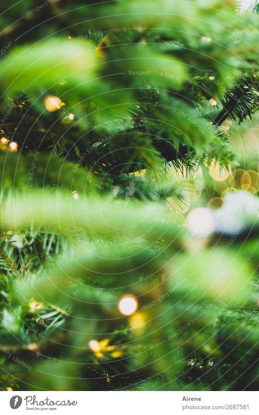 Tree of Lights III Christmas & Advent Christmas tree Decoration Candle Illuminate Yellow Green Emotions Joy Anticipation Hope Belief Religion and faith