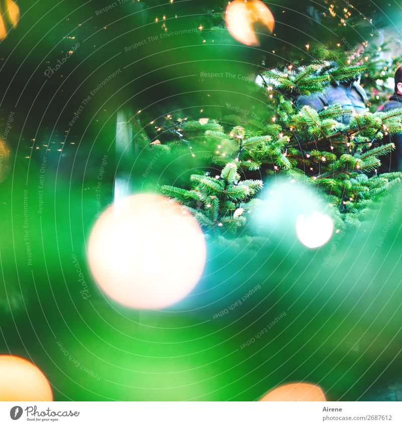 Christmas & Advent White Tree Joy Religion and faith Yellow Emotions Decoration Illuminate Candle Hope Belief Christmas tree Turquoise Fairy lights