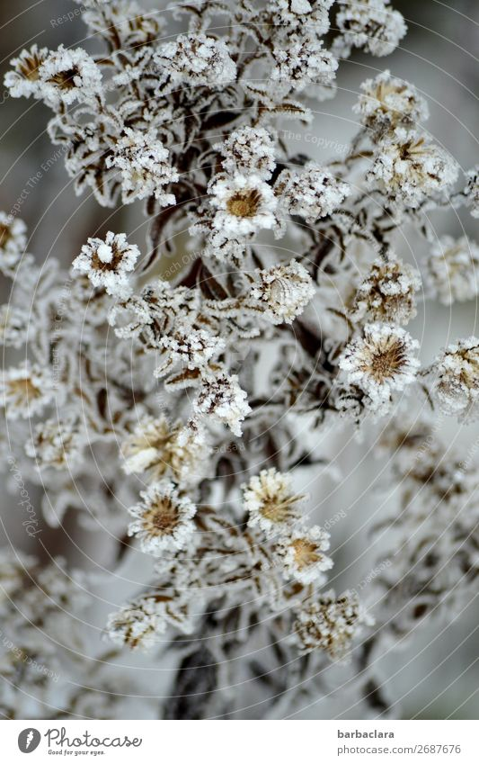 Icy beauty Plant Winter Ice Frost Bushes Leaf Blossom Garden Esthetic Bright Cold Silver White Moody Romance Climate Nature Environment Change Colour photo