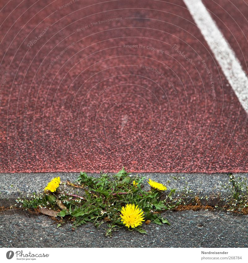 assertiveness Herbs and spices Track and Field Sporting Complex Stadium Racecourse Nature Plant Spring Places Street Lanes & trails Line String Fitness Sports