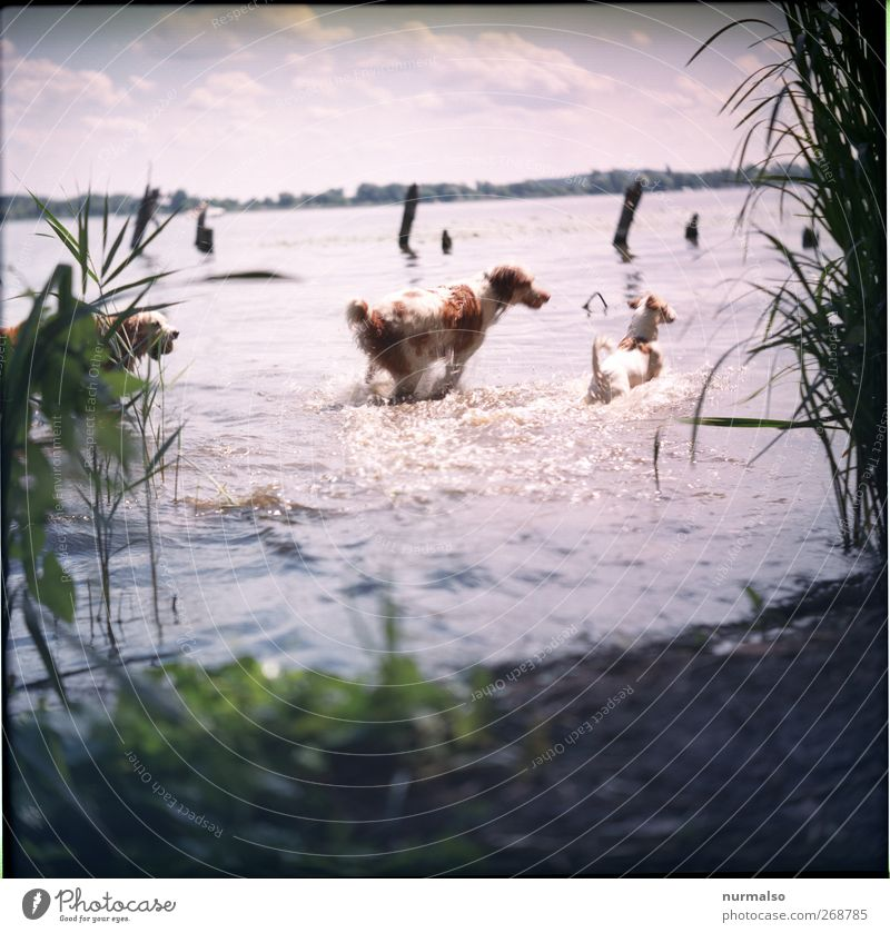 Dog Nature Water Plant Summer Animal Landscape Playing Coast Moody Swimming & Bathing Waves Leisure and hobbies Beautiful weather Running Hunting