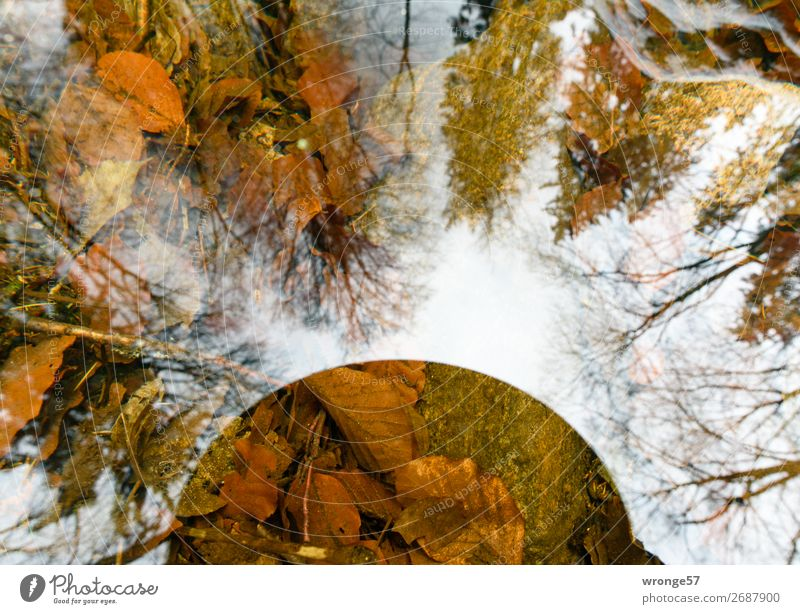reflections Environment Nature Plant Earth Air Water Sky Autumn Winter Beautiful weather Tree Leaf Forest River bank Harz Observe Dream Far-off places Near Wet