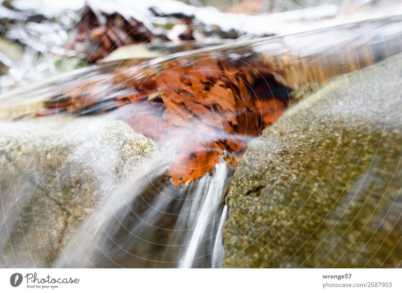 Nature Blue Green Water White Leaf Winter Autumn Cold Natural Stone Brown Gray Wet River Clarity