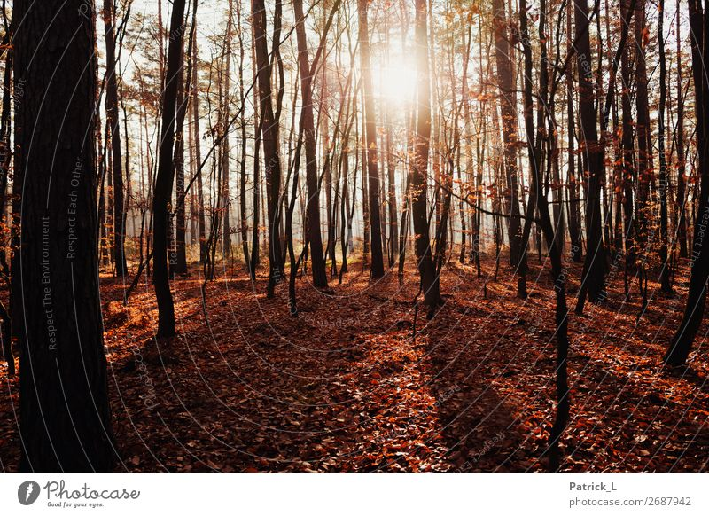autumn forest Nature Plant Autumn Climate change Beautiful weather Tree Bushes Leaf Foliage plant Wild plant Deciduous forest Deciduous tree Forest Mixed forest