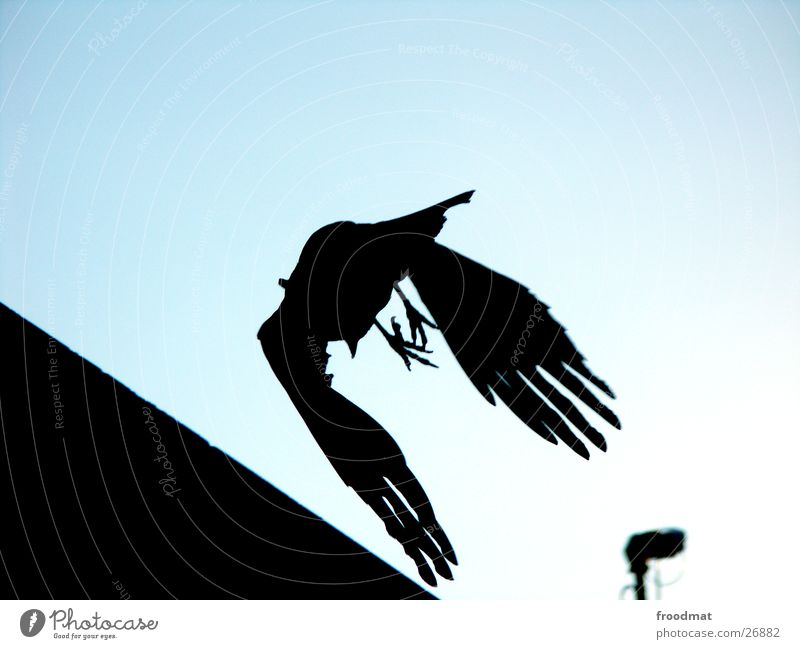 Sky Lamp Bird Flying Transport Corner Wing Silhouette Crow
