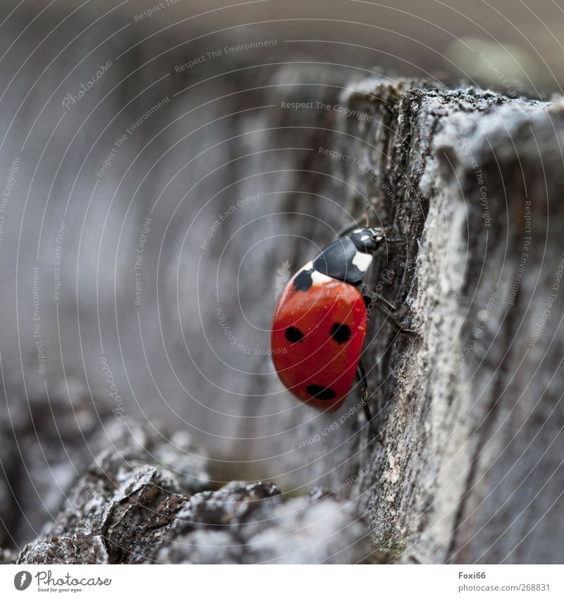 where did all the flowers go...? Nature Air Spring Tree Beetle Ladybird 1 Animal Wood Infinity Natural Red Black White Movement Energy Relaxation Moody