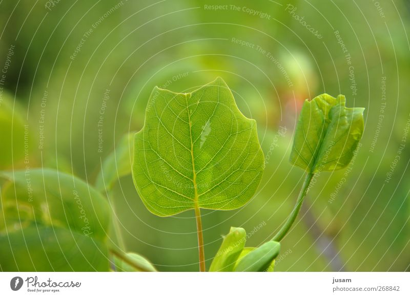 leaf of life Environment Nature Plant Leaf Foliage plant Bright Natural Juicy Green Fresh Leaf green Rachis Colour photo Exterior shot Detail