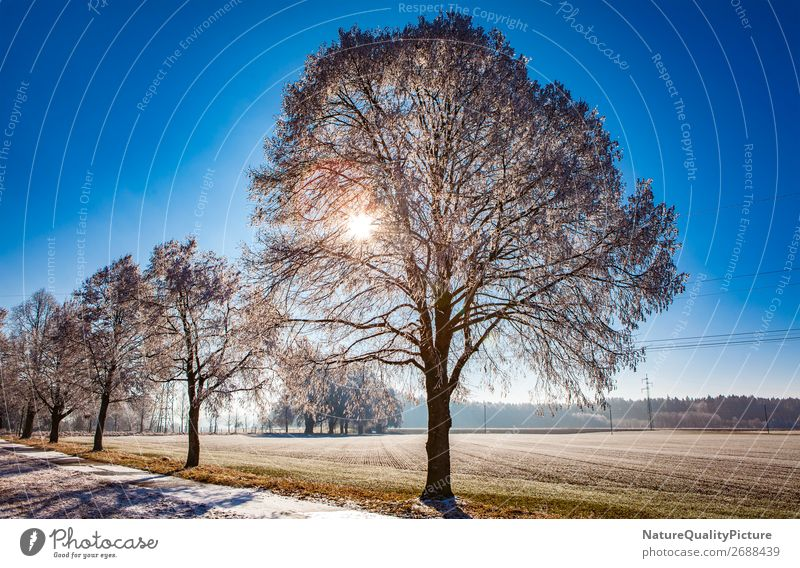 Winter frost in Allgaeu Life Harmonious Well-being Contentment Senses Relaxation Calm Meditation Tourism Adventure Far-off places Freedom Snow Winter vacation