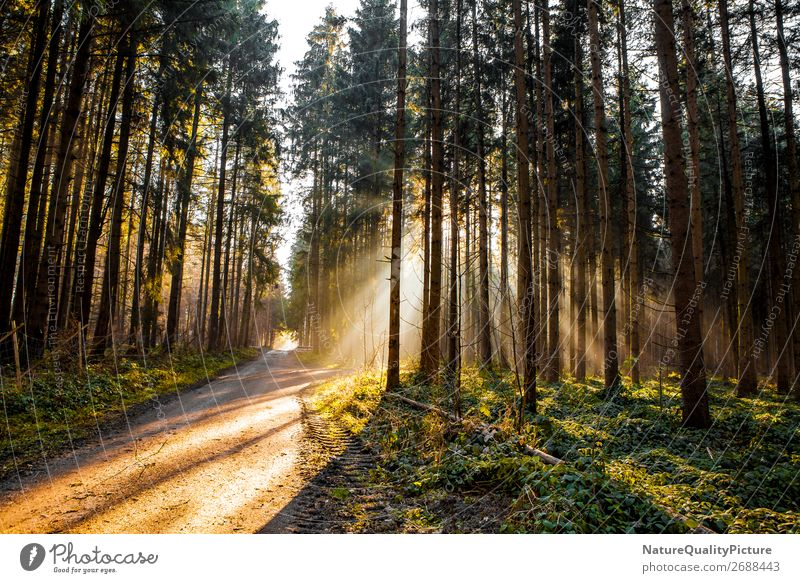 Sunbeams in the forest Harmonious Senses Spa Tourism Adventure Winter Hiking Sports Fitness Sports Training Nature Plant Animal Sunlight Autumn Tree Wild plant