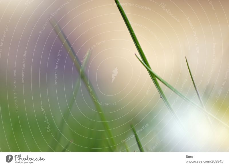 Nature Green Plant Environment Grass Growth Blade of grass Grassland Grass meadow