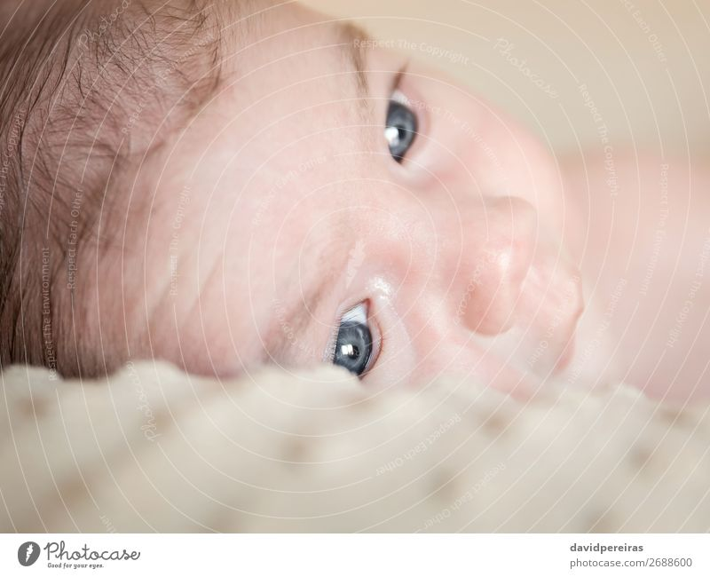 Portrait of newborn baby lying down over a blanket Lifestyle Happy Beautiful Body Skin Face Relaxation Child Human being Baby Boy (child) Infancy Love Sleep