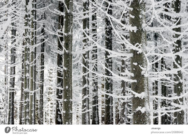 freezing cold Nature Winter Snow Tree Coniferous trees Forest Cold White Colour photo Exterior shot Deserted