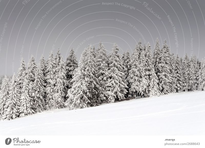 Deep winter Vacation & Travel Winter Snow Nature Landscape Plant Sky Ice Frost Tree Forest Cold Beautiful Moody Spruce forest Black Forest Colour photo