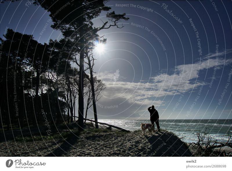 Sigismund Rüstig Man Adults 1 Human being Environment Nature Landscape Plant Sky Clouds Horizon Sun Beautiful weather Tree Coast Baltic Sea Western Beach Dog