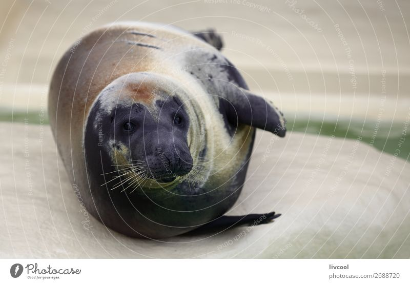 Nice seal Blue Animal Funny Coast Gray Sand Fresh Europe Happiness France Fat Museum Aquarium Snout Moustache Biarritz