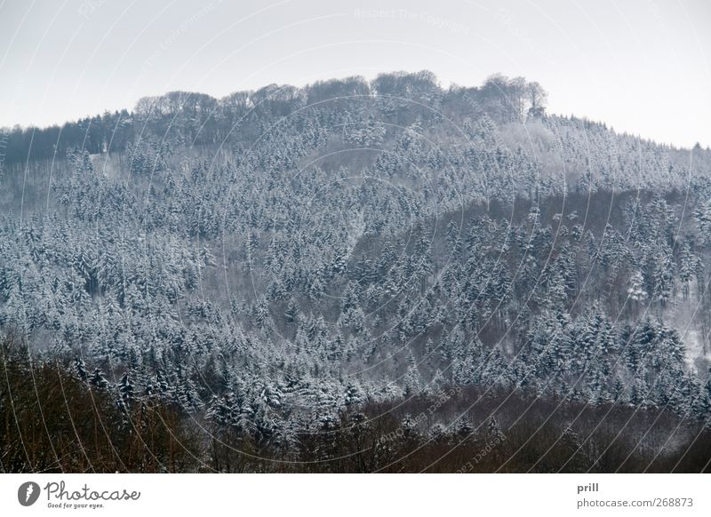 Nature Tree Plant Winter Clouds Forest Landscape Cold Background picture Frost Idyll Branch Frozen Twig Rural Dreary